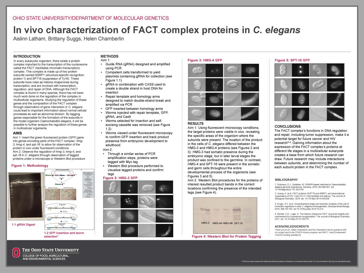 In vivo characterization of FACT complex proteins in C. elegans