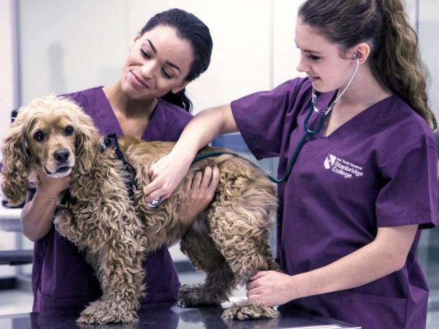 Vet Tech Needed At Green Meadows Veterinary Hospital Ansci