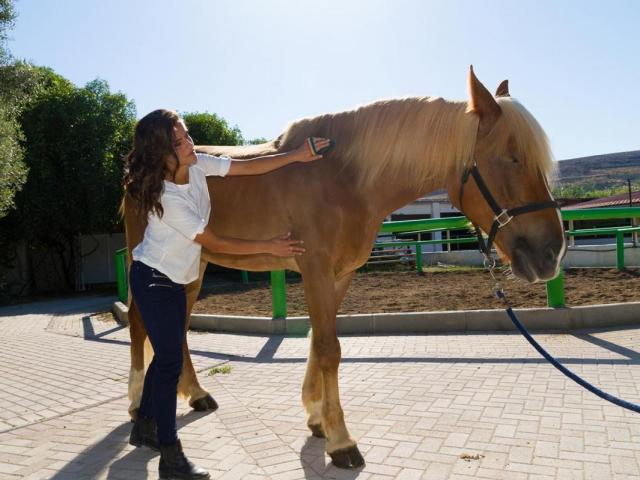 Equine Massage Therapy Certification Course | ANSCI