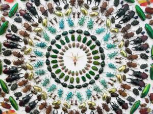Circle of bugs