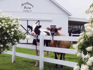 Cattle barn
