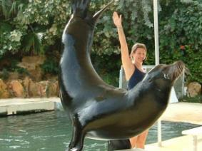 Seal hand stand