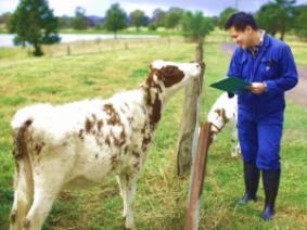 Animal scientist