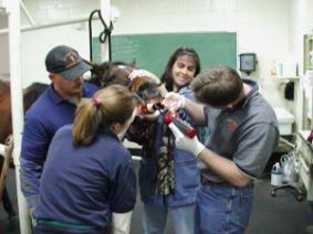 Veterinary students help horse